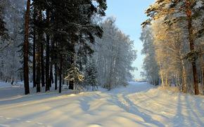 Зима, Дороги, Снег, Деревья