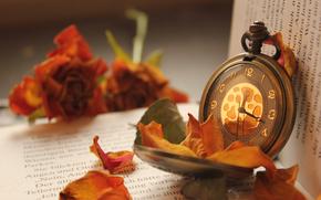 Buch, Rose, Blumen, beobachten, Tasche, Bltenbltter