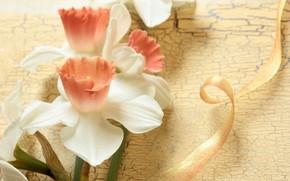 Daffodils, fiori, nastro, tenerezza