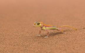 Mars, lizard, background