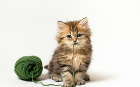 cat, kitten, ball, green thread, game, white background
