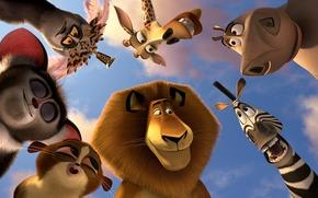 животные, лев алекс, звери, зебра марти, мультфильм, бегемот глория, жираф мелман, лемуры, король джулиан, морис, морт