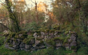 forest, thicket, masonry, stones, moss, abandonment, Trees