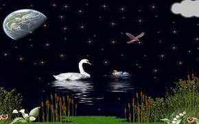 ночь, озеро, лебеди, звёзды