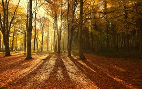 natura, autunno, foresta, alberi, sole, raggi, luce, ombra, fogliame
