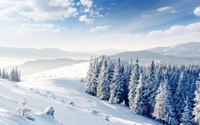 colline, nuvole, inverno, Alberi, neve