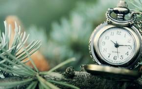 часы, стрелки, цифры, макро, ветка, циферблат