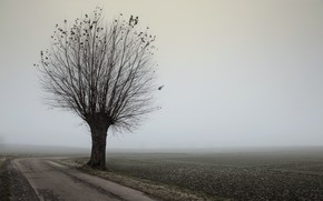 road, tree, fog, landscape