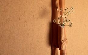 muro, intonaco, albero, fiori, mazzo di fiori, Camomilla, luce