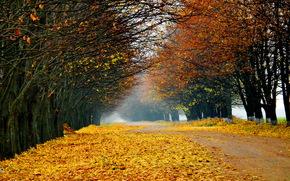 Naturaleza, paisaje, Los rboles, bosque, carretera, otoo