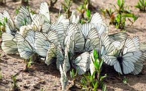 land, grass, Butterflies, Moths, wings, insects