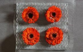 цветы, цветок, герберы, красные, булавки, ткань