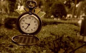 часы, макро, цифры, стрелки, циферблат