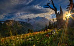 Parque Nacional Monte Rainier, puesta del sol, Montaas, Flores, paisaje