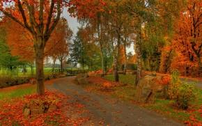parco, alberi, ponte, traccia, prato, paesaggio