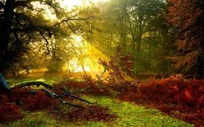 forest, Trees, rays, light, foliage, grass, autumn