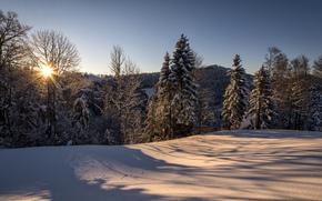 Швейцария, Санкт-Галлен, hulftegg, природа, зима, утро, солнце, лес, снег, philipp h