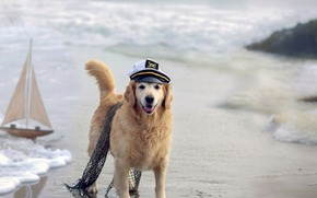 pies, czapka, sie, morze, statek, psy, figlarny, szczeniak, twarz, pcherzyki, adny, pikny, zwierzta, szczeniaki, zabawny pies, bardzo, sodki, twarz pies, pikno, paci