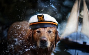 pies, czapka, ki, woda, psy, figlarny, szczeniak, pcherzyki, twarz, pikny, adny, zwierzta, szczeniaki, zabawny pies, bardzo, sodki, twarz pies, paci, pikno