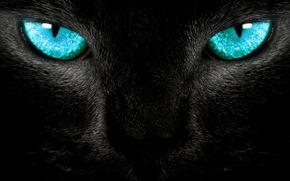 Katze, schlau, Blick, blau, Wolle, Katze, Blau, schwarz, Ktzchen, Blick