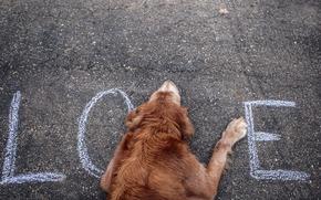 Hund, Strae, lieben, Text,