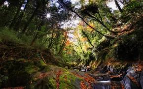 太陽, 石, 川, 小川, 塊炭, 森, 菜, 木, 苔