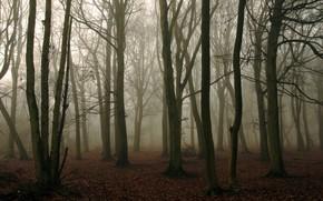 foresta, nebbia, natura