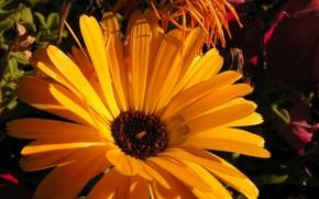 natura, fiore, giallo