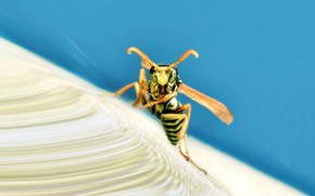 insect, wasp, wings, Strips