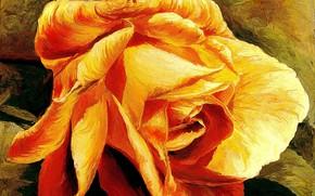 роза, желтая, золотая
