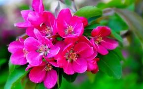 цветение, ветка, макро