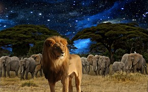 leone, Elefanti, cielo, Stella, Photoshop