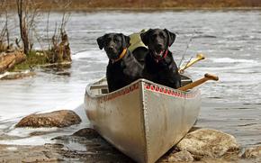 barco, preto, cor, VAR, Ps, PESCA, pequeno rio
