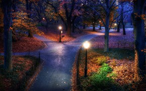 park, evening, lights, forest, Trees, autumn, foliage, alley