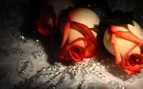 Flores, Hermoso, Rosa, cristales