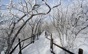 inverno, alberi, neve, traccia