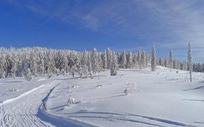 inverno, campo, traccia, paesaggio