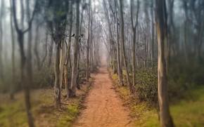 аллея, тропинка, дорожка, деревья, стволы, роща