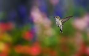 фокус, колибри, птица, размытость