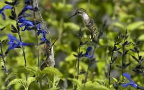 птица, колибри, цветы, природа, солнечно