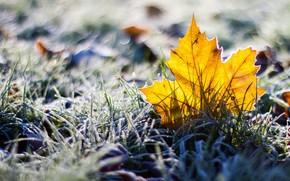 лист, трава, макро