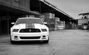 форд мустанг, белый, передок, чёрно-белое фото, Ford