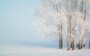 Туман, иней, мороз, деревья, снег, зима