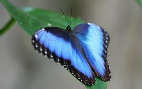 Лист, бабочка, крылья, усики