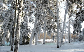 hiver, neige, arbres