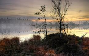 осень, озеро, туман, сухая, трава, доски, деревья