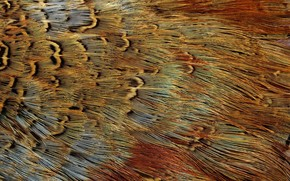 texture, exotic bird feathers, background in business