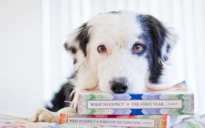 perro, ver, Libros