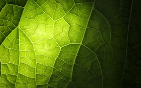 лист, зеленый, свет, прожилки, макро