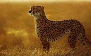 Arte, ghepardo, predatore, gatto, selvatico, erba, savana